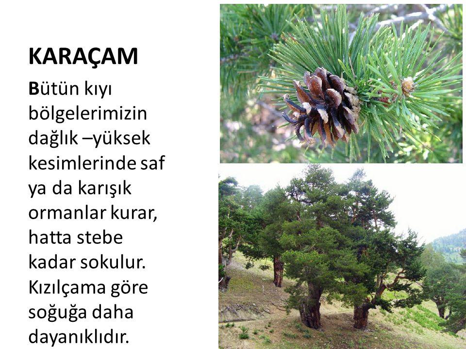 KARAÇAM