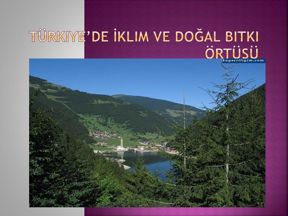 Türkiye'de İklim ve Doğal Bitki Örtüsü