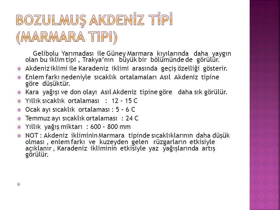 BOZULMUŞ AKDENİZ TİPİ (Marmara Tipi)