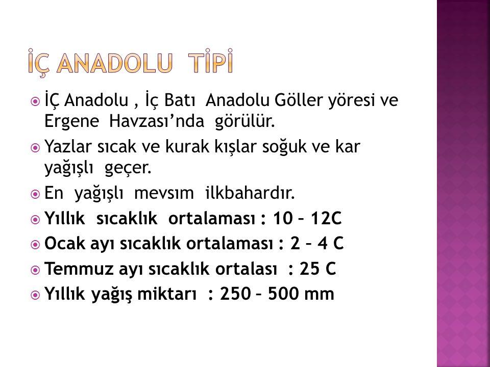 İÇ ANADOLU TİPİ İÇ Anadolu , İç Batı Anadolu Göller yöresi ve Ergene Havzası'nda görülür.