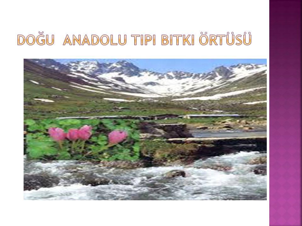 Doğu Anadolu tipi bitki örtüsü
