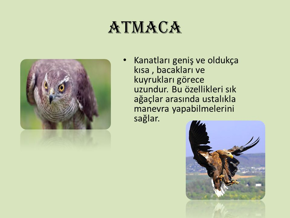 ATMACA