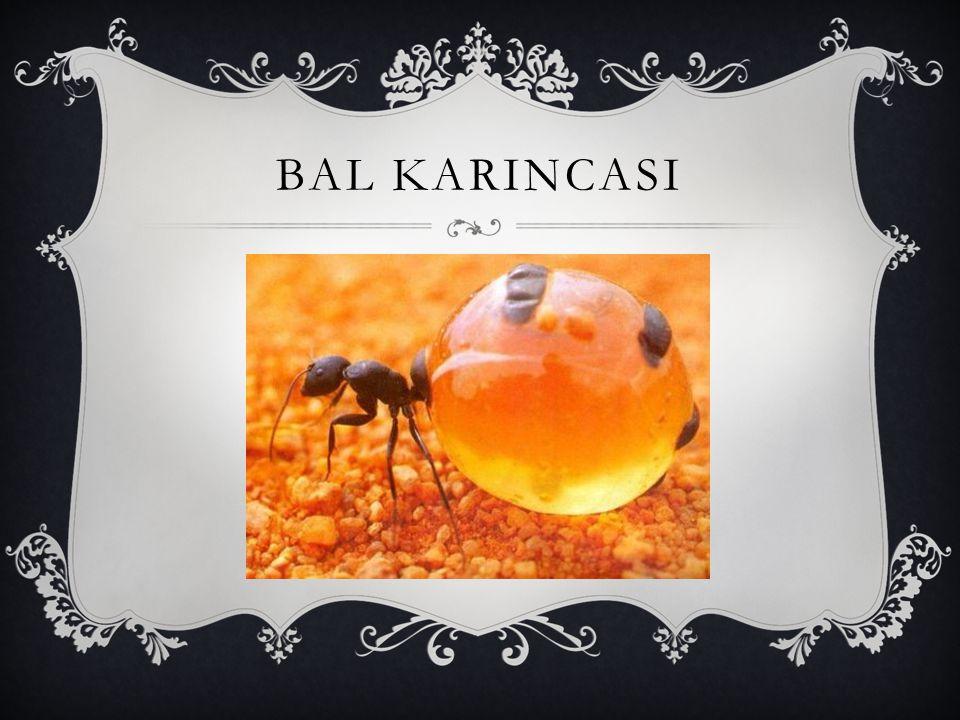 BAL KARINCASI