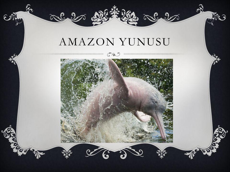 AMAZON YUNUSU