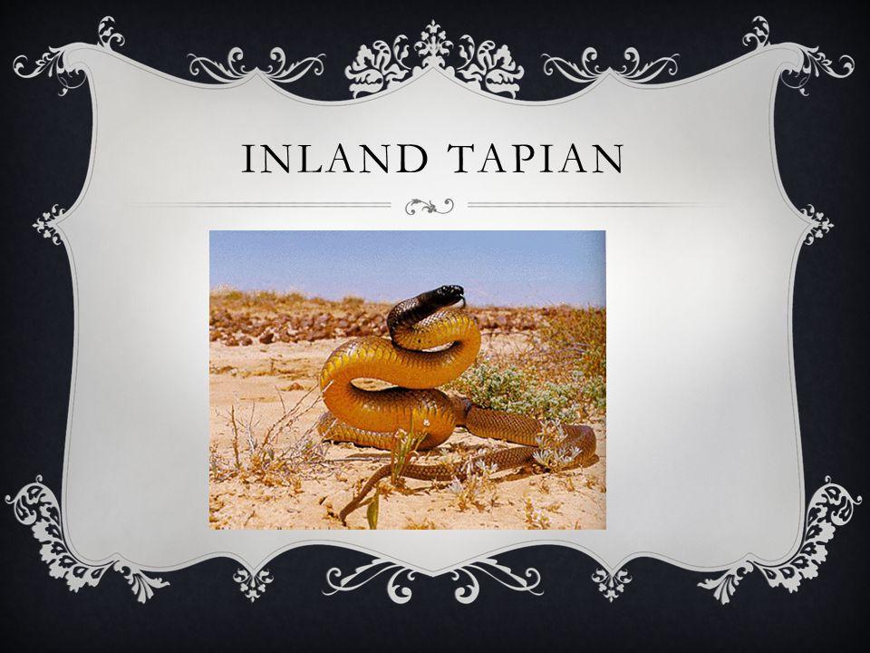 INLAND TAPIAN