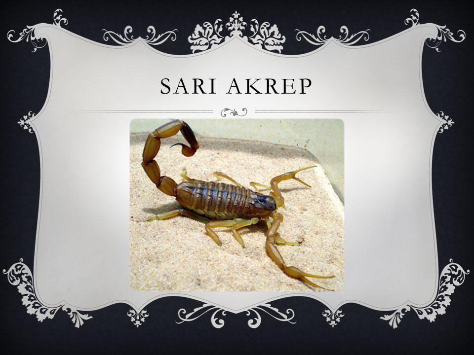 SARI AKREP