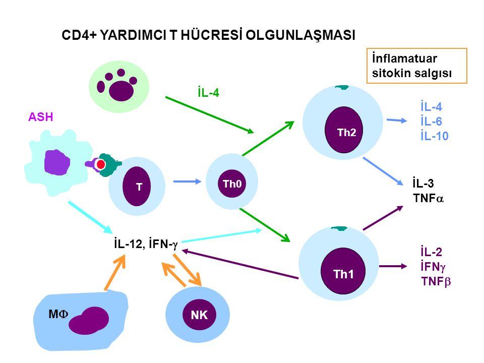 CD4+ YARDIMCI T HÜCRESİ OLGUNLAŞMASI