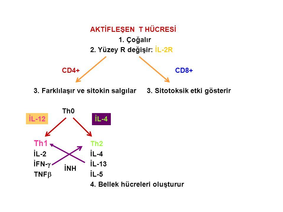 Th1 Th2 AKTİFLEŞEN T HÜCRESİ 1. Çoğalır 2. Yüzey R değişir: İL-2R