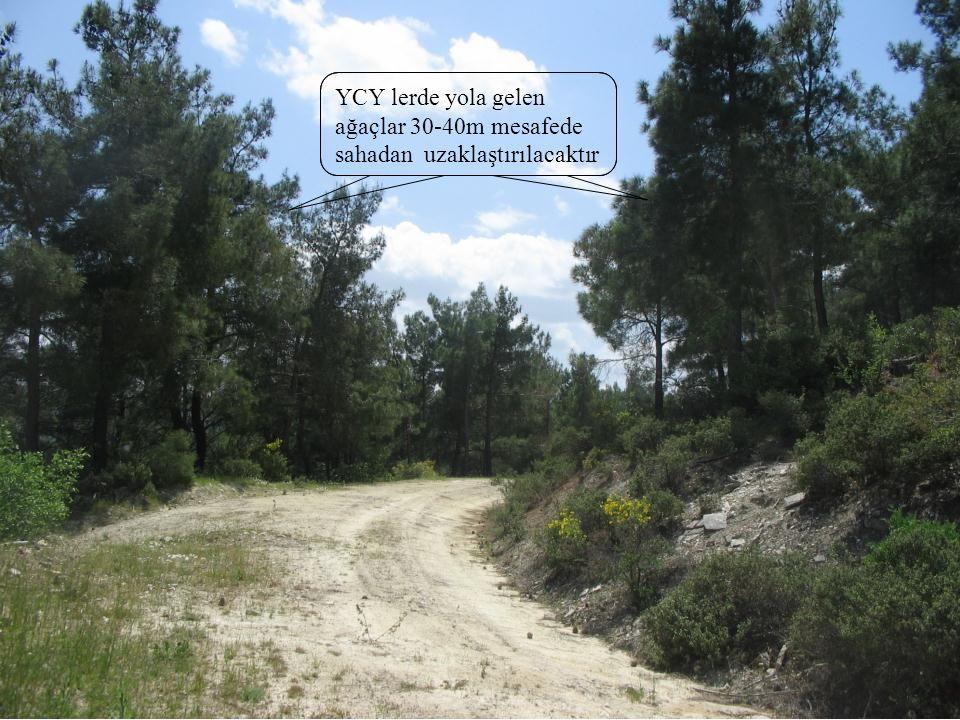 YCY lerde yola gelen ağaçlar 30-40m mesafede sahadan uzaklaştırılacaktır