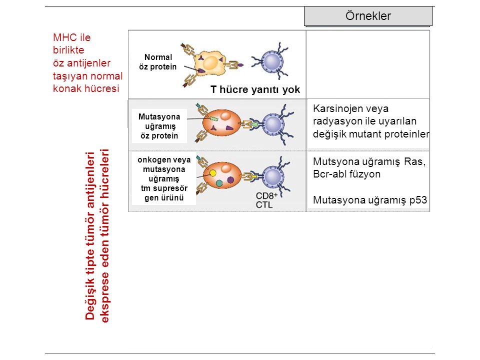 Değişik tipte tümör antijenleri eksprese eden tümör hücreleri