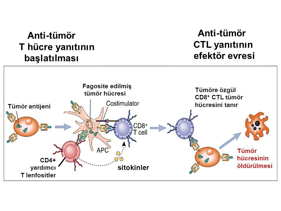 T hücre yanıtının başlatılması