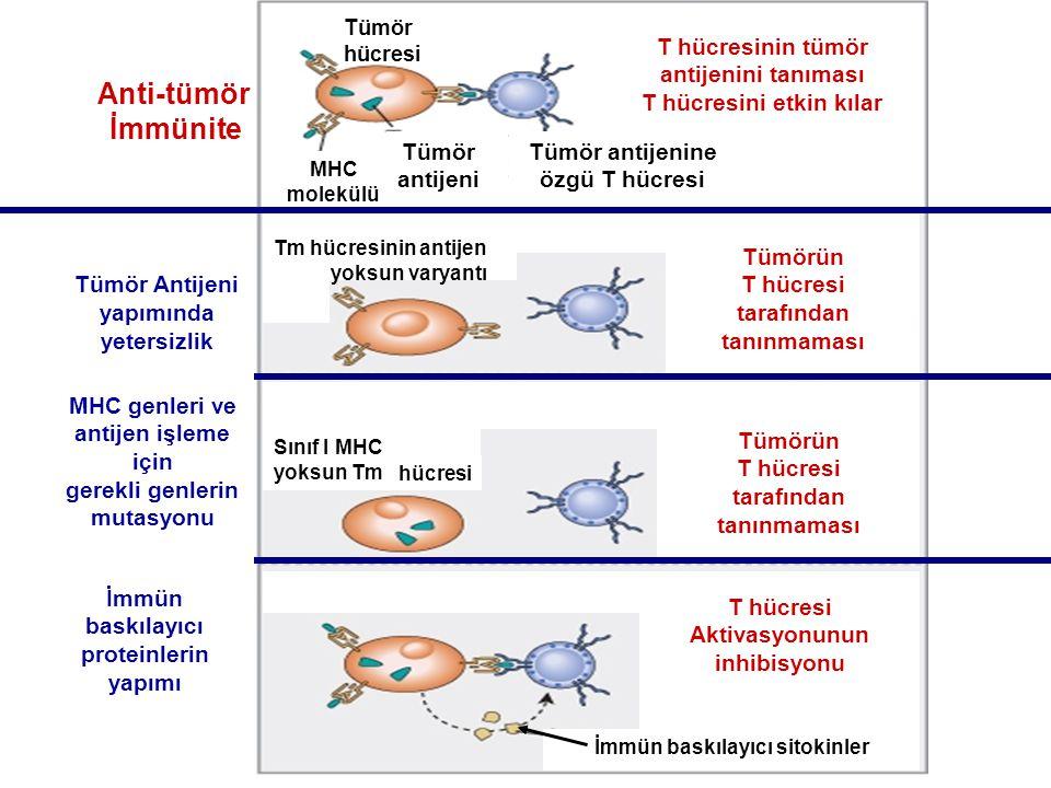 Anti-tümör İmmünite antijeni Tümör antijenine özgü T hücresi