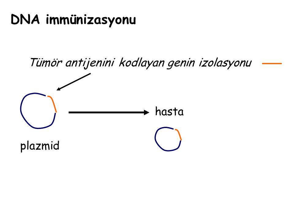 DNA immünizasyonu Tümör antijenini kodlayan genin izolasyonu hasta