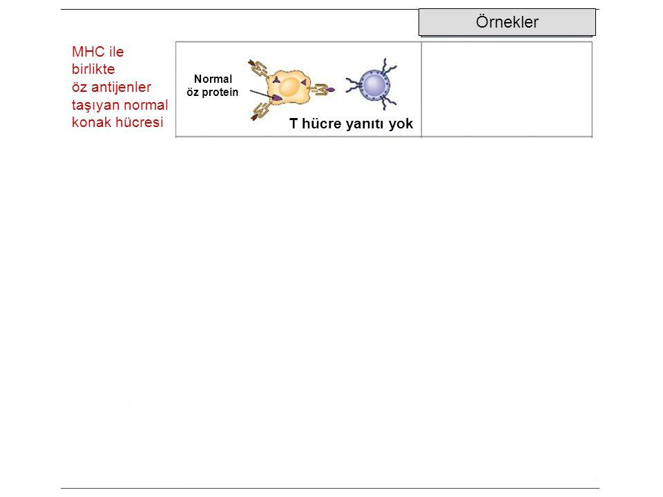 Örnekler MHC ile birlikte öz antijenler taşıyan normal konak hücresi