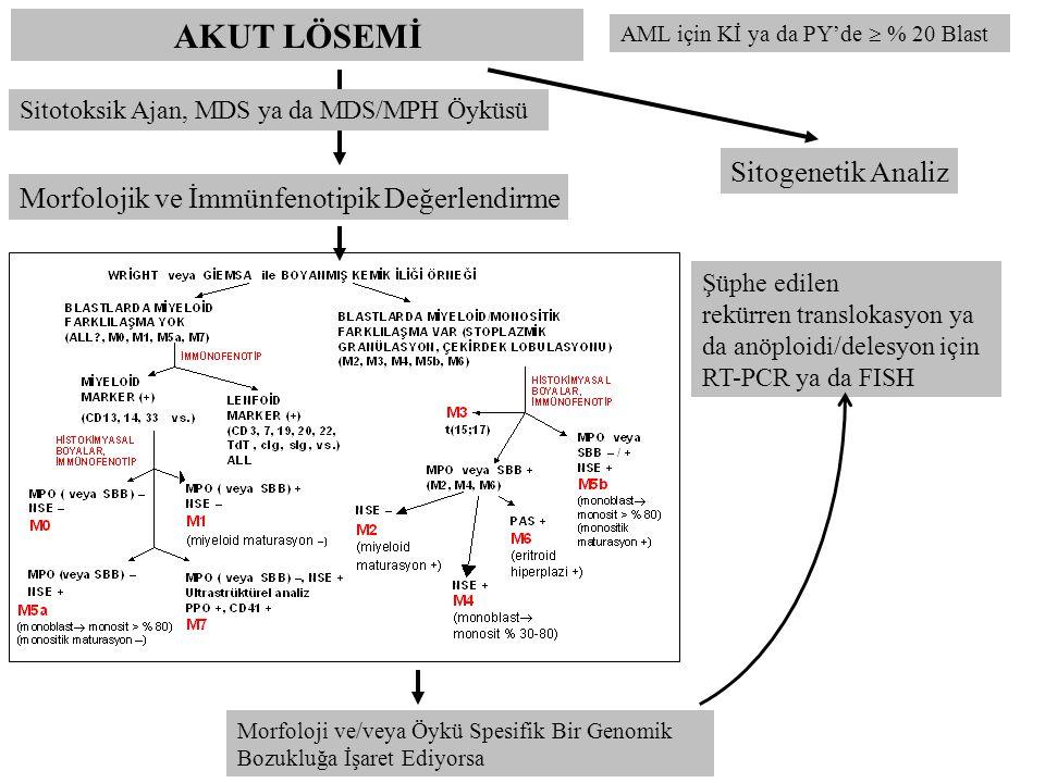 AKUT LÖSEMİ Sitogenetik Analiz
