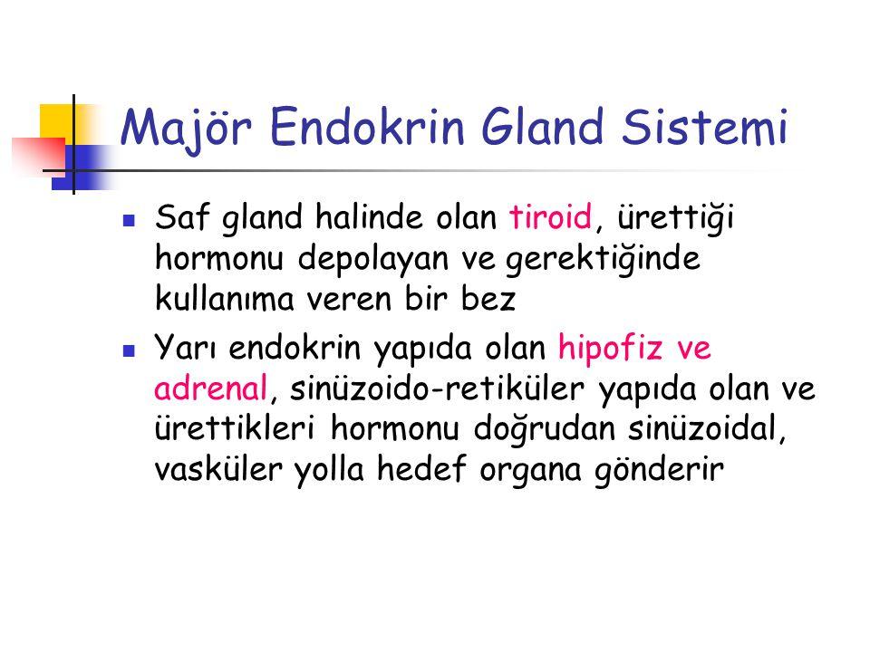Majör Endokrin Gland Sistemi