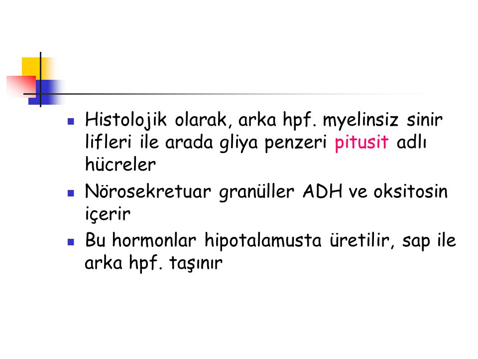 Histolojik olarak, arka hpf