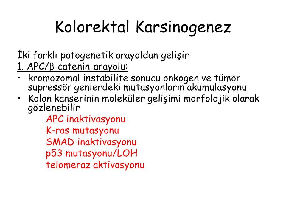 Kolorektal Karsinogenez