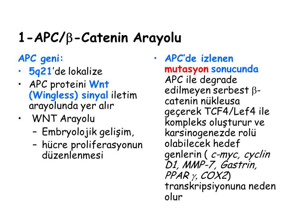 1-APC/b-Catenin Arayolu