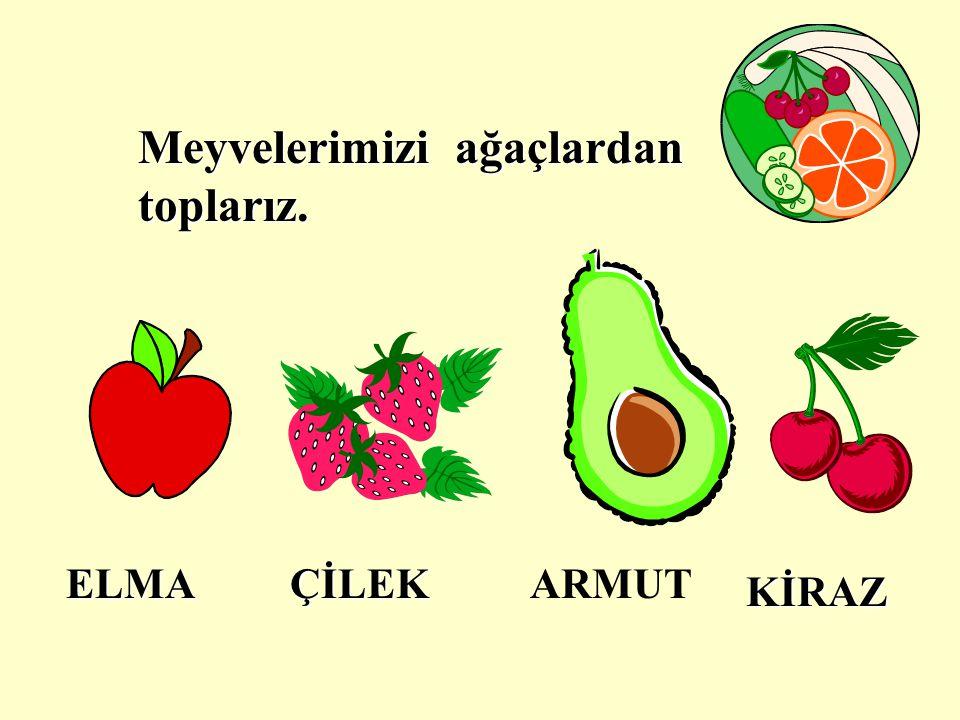 Meyvelerimizi ağaçlardan toplarız.