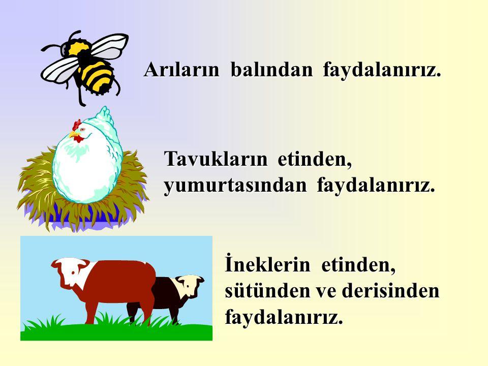 Arıların balından faydalanırız.