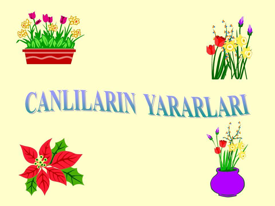 CANLILARIN YARARLARI