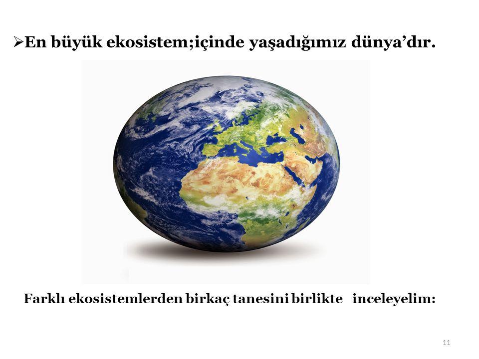 En büyük ekosistem;içinde yaşadığımız dünya'dır.
