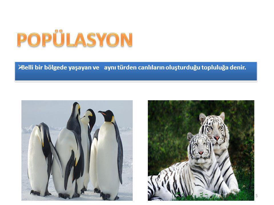 POPÜLASYON Belli bir bölgede yaşayan ve aynı türden canlıların oluşturduğu topluluğa denir.