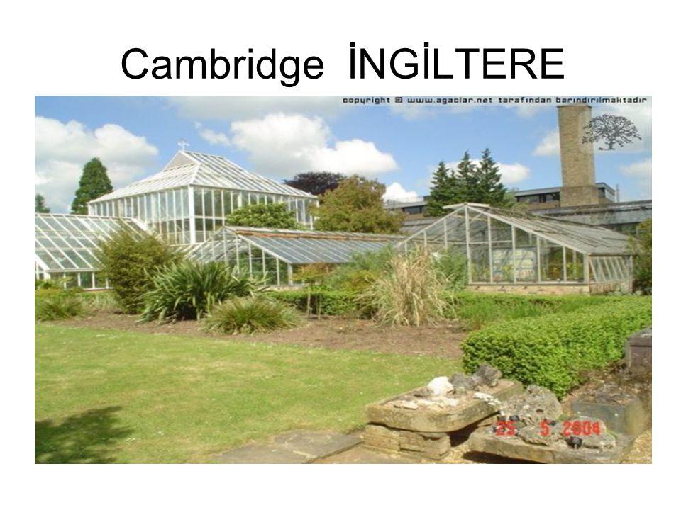 Cambridge İNGİLTERE
