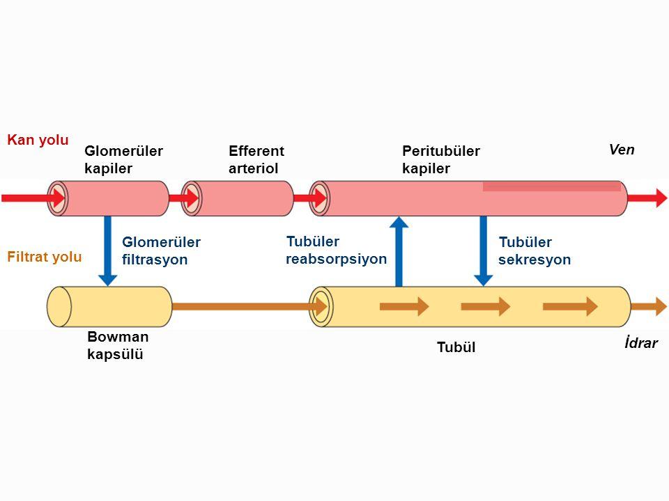 Kan yolu Glomerüler. kapiler. Efferent. arteriol. Peritubüler. kapiler. Ven. Glomerüler. filtrasyon.