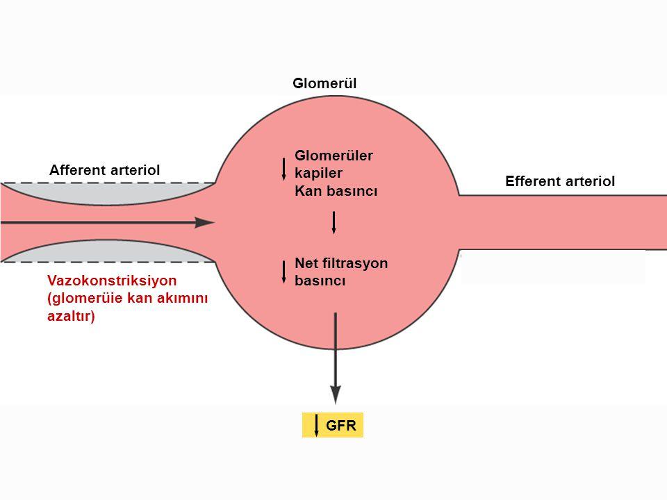 Vazokonstriksiyon (glomerüie kan akımını. azaltır) Afferent arteriol. Glomerül. Efferent arteriol.