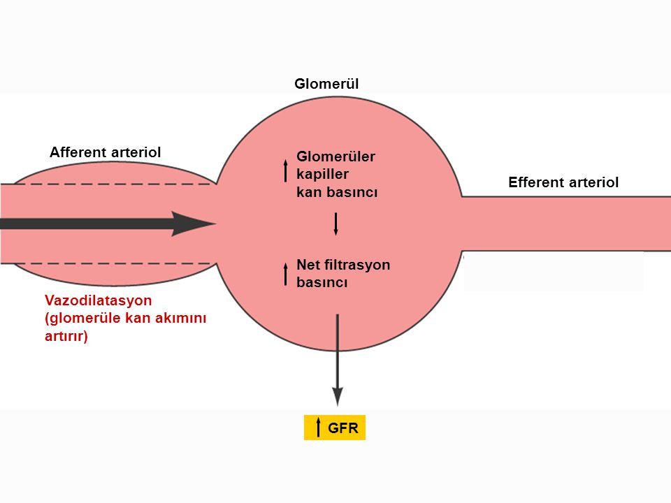 Afferent arteriol Glomerül. Efferent arteriol. Glomerüler. kapiller. kan basıncı. Net filtrasyon.