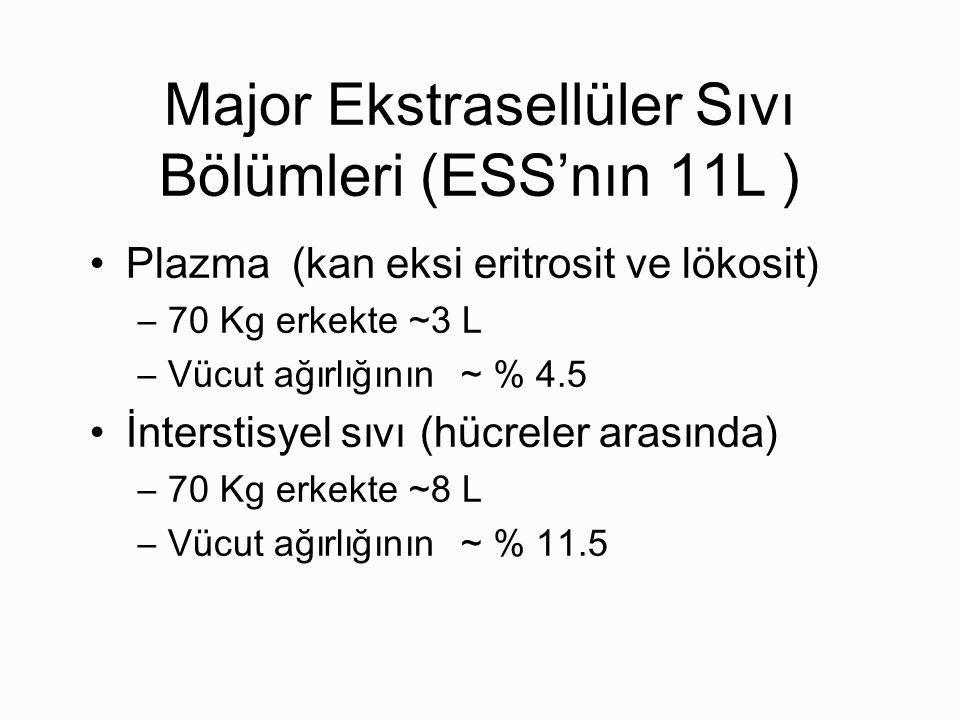 Major Ekstrasellüler Sıvı Bölümleri (ESS'nın 11L )