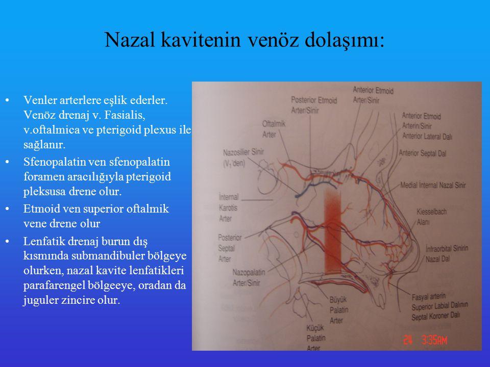 Nazal kavitenin venöz dolaşımı: