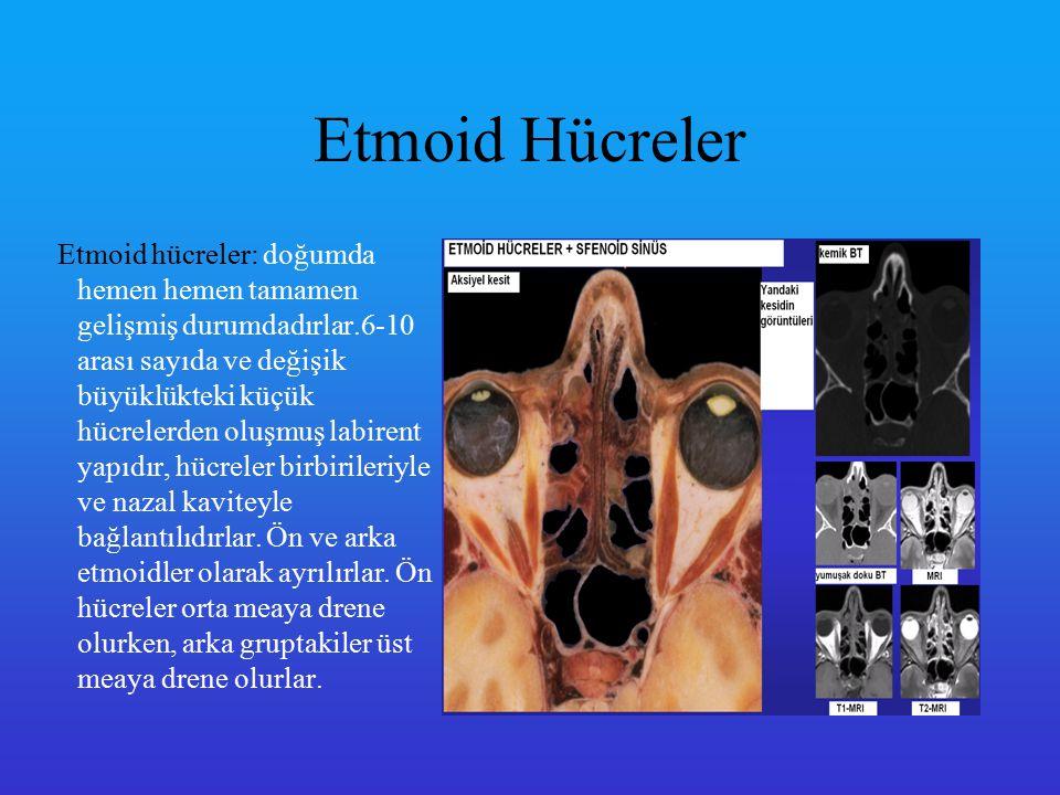 Etmoid Hücreler