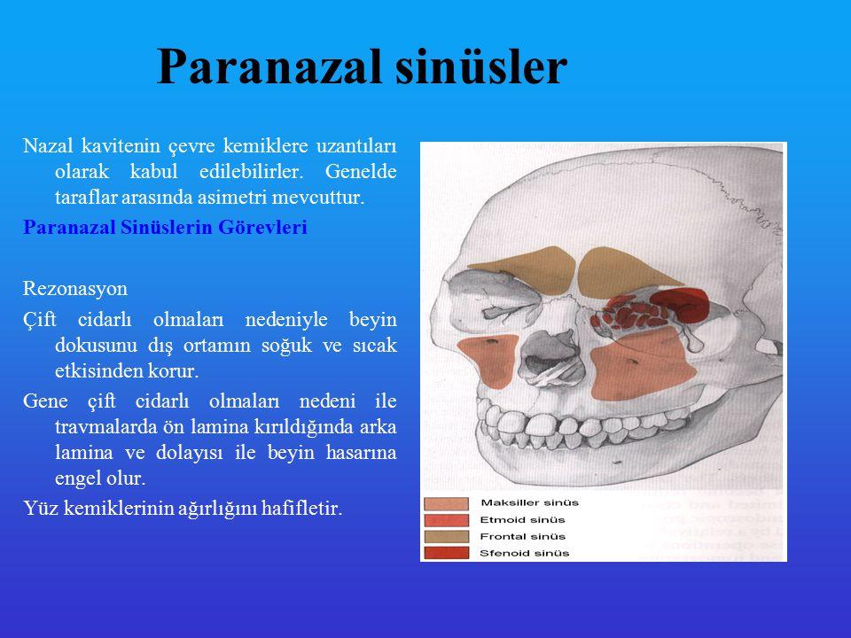 Paranazal sinüsler Nazal kavitenin çevre kemiklere uzantıları olarak kabul edilebilirler. Genelde taraflar arasında asimetri mevcuttur.