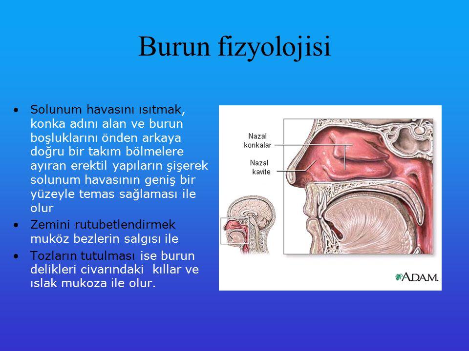 Burun fizyolojisi