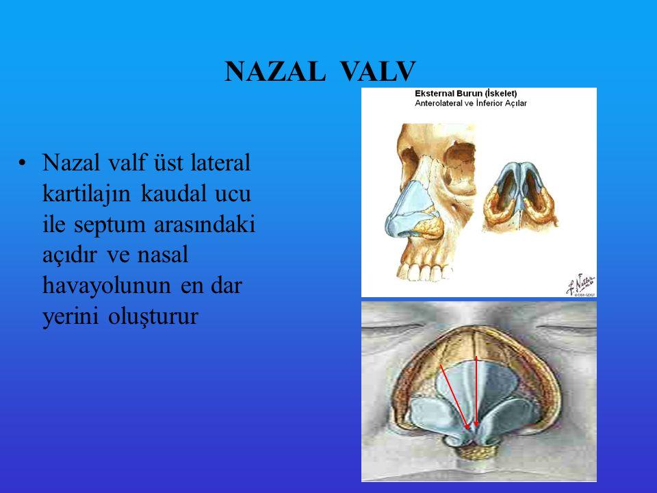 NAZAL VALV Nazal valf üst lateral kartilajın kaudal ucu ile septum arasındaki açıdır ve nasal havayolunun en dar yerini oluşturur.