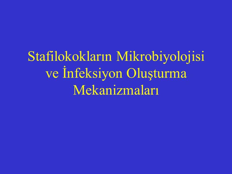 Stafilokokların Mikrobiyolojisi ve İnfeksiyon Oluşturma Mekanizmaları