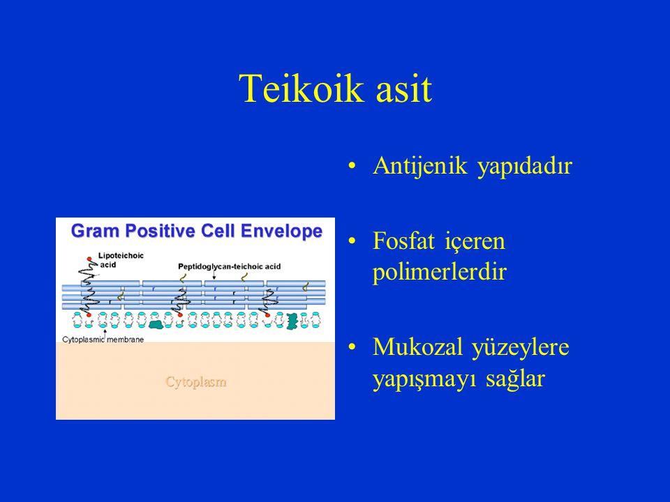 Teikoik asit Antijenik yapıdadır Fosfat içeren polimerlerdir