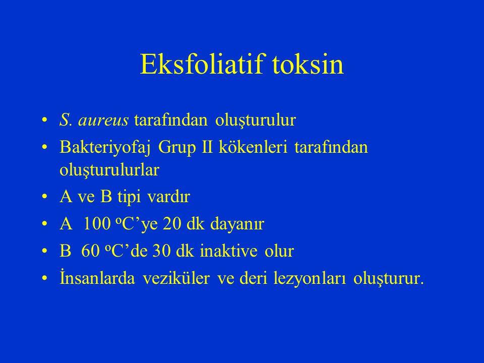 Eksfoliatif toksin S. aureus tarafından oluşturulur