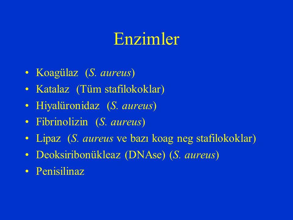 Enzimler Koagülaz (S. aureus) Katalaz (Tüm stafilokoklar)