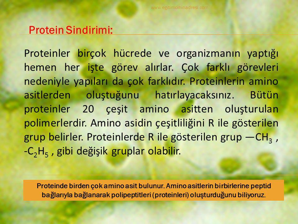 www.egitimcininadresi.com Protein Sindirimi: