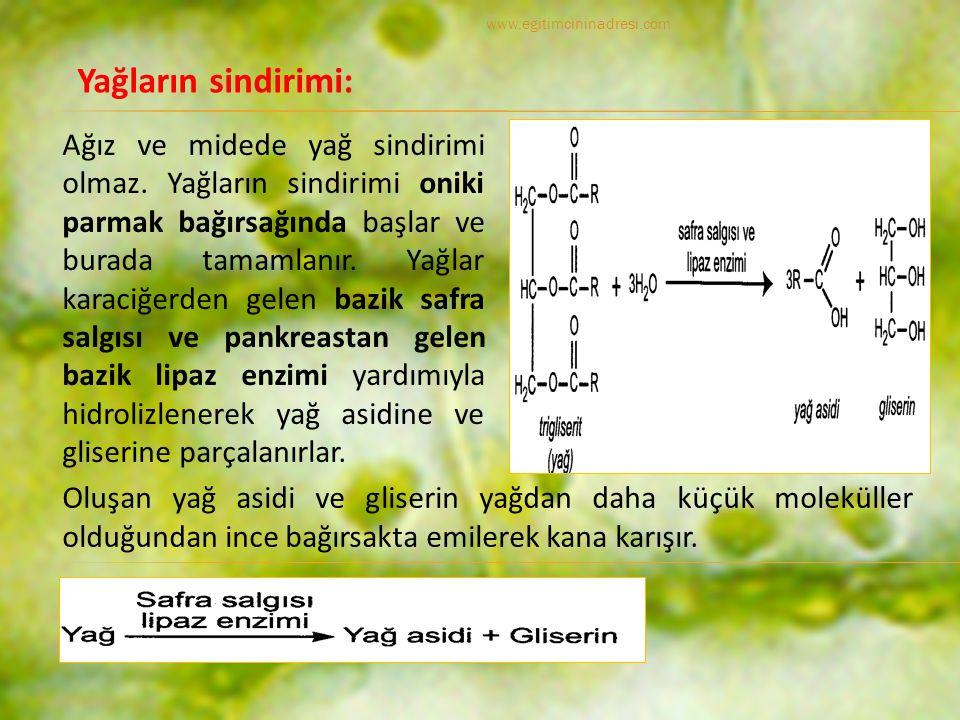 www.egitimcininadresi.com Yağların sindirimi: