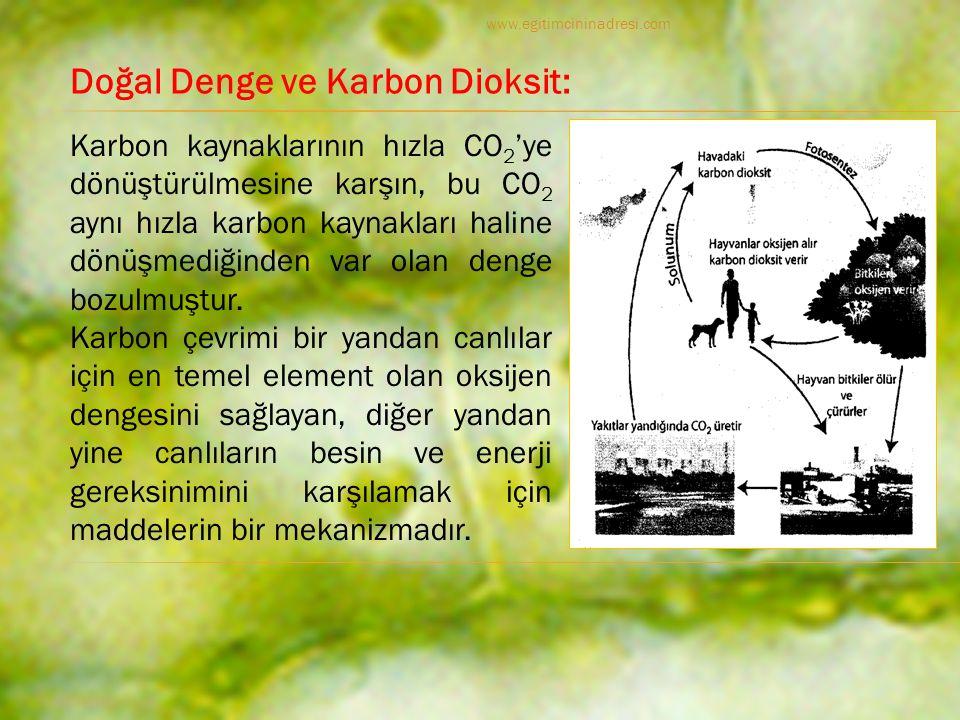 Doğal Denge ve Karbon Dioksit: