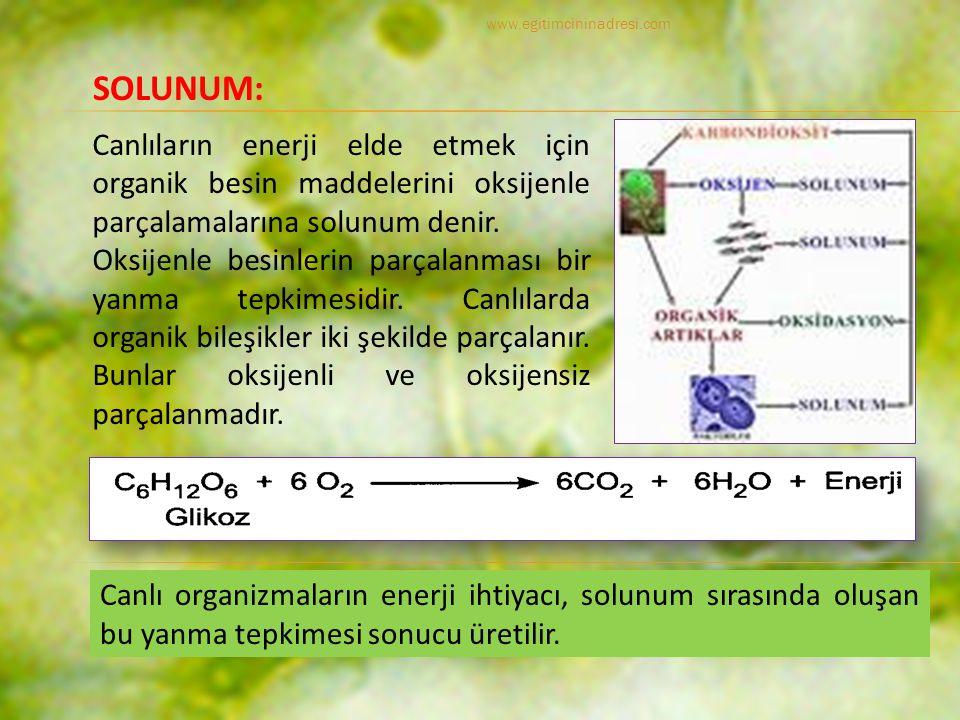 www.egitimcininadresi.com SOLUNUM: Canlıların enerji elde etmek için organik besin maddelerini oksijenle parçalamalarına solunum denir.
