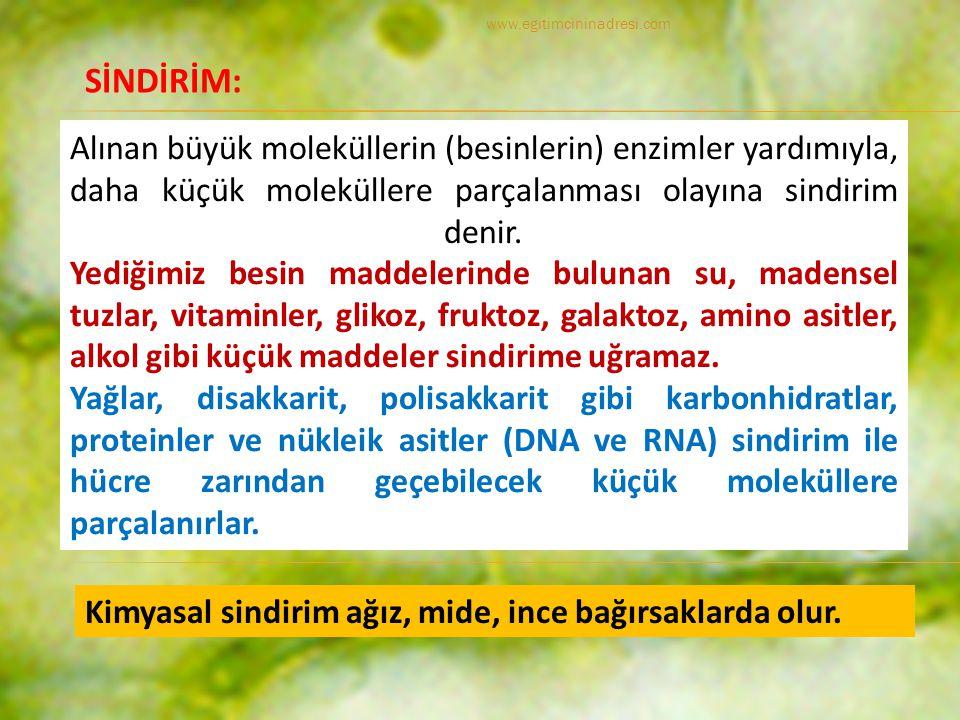 www.egitimcininadresi.com SİNDİRİM: