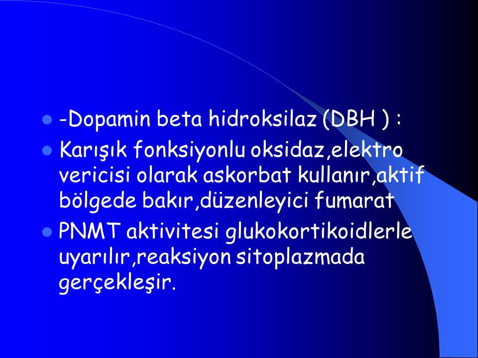 -Dopamin beta hidroksilaz (DBH ) :