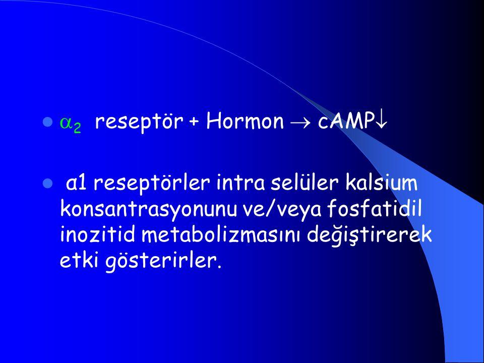 2 reseptör + Hormon  cAMP