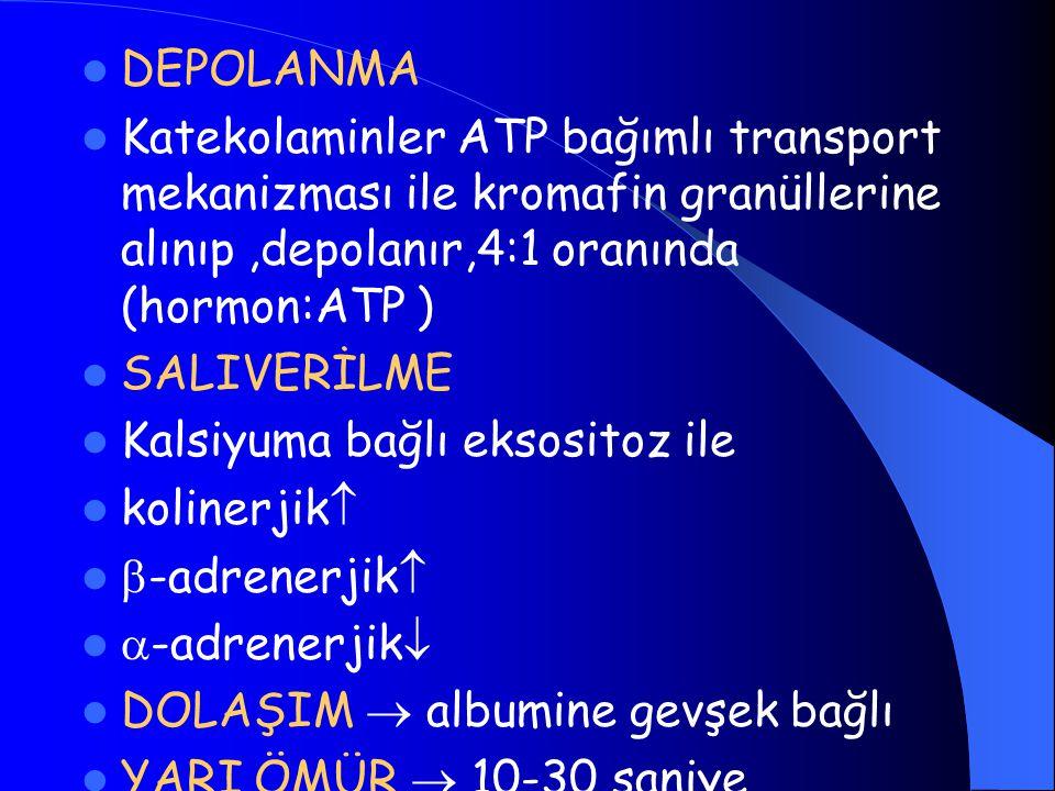 DEPOLANMA Katekolaminler ATP bağımlı transport mekanizması ile kromafin granüllerine alınıp ,depolanır,4:1 oranında (hormon:ATP )
